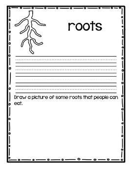Plants- Key Content Vocabulary Student Book