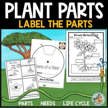 Plants Unit Kindergarten 1st Grade - Parts of Plants
