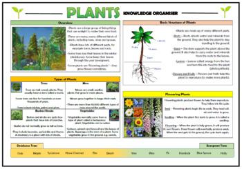 Plants Knowledge Organizer! (for Grades K-1)