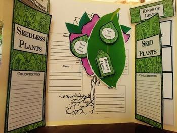 Plants Lap Book