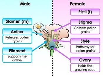 Plants: Leaves, Photosynthesis, Roots, Stems, Flowers and Seeds