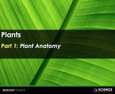 PPT - Plants: Leaves, Photosynthesis, Roots, Stems, Flower
