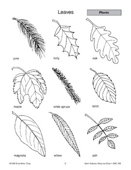 Plants: Leaves and Photosynthesis