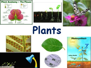 Plants Lesson & Flashcards - task cards, study guide, 2017 update