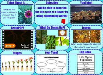 Plants Life Cycle Bundle