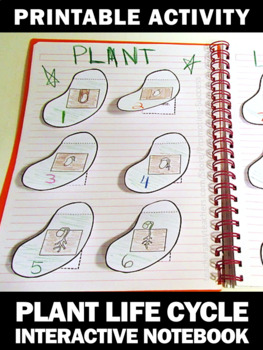 Plant Life Cycle Interactive Notebook, Plant Life Cycle Cut and Paste Craftivity