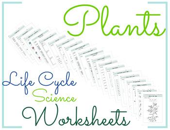 Plants Life Cycle Science Worksheet 2