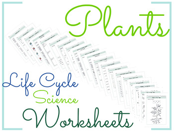 Plants Life Cycle Science Worksheet 4