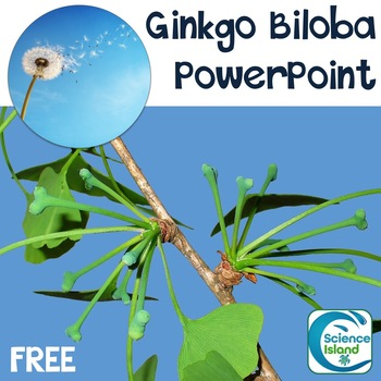 Plants: Life Cycle of the Ginkgo Biloba PowerPoint