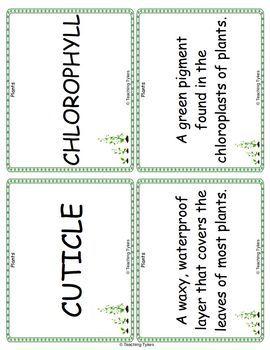 Plants Vocabulary Cards
