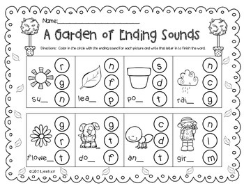 Plants: Literacy, Science and Math Activities for the Early Learner