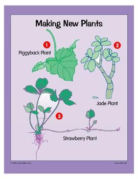 Plants: Making New Plants