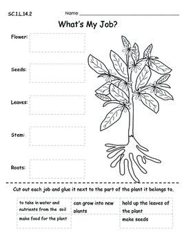 Plants Mini Unit SC.1.L.14.2  SC.1.L.17.1