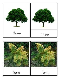 Plants - Montessori 3-Part Cards - Reading Classification