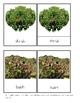 Montessori Botany - Plants 3-Part Cards