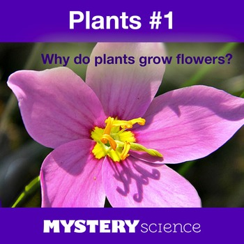 Plants NGSS:Flower Parts, Life Cycle ❤ BUNDLE:Activity, Reading,Assessment—SALE