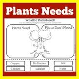 Plants Needs | Basic Needs of Plant | Pre K Kindergarten 1