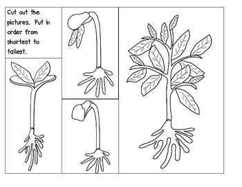 Life Cycle Of A Plant Teaching Resources | Teachers Pay Teachers