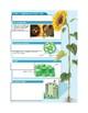 Plants- Origins of plant life notes