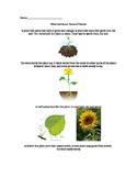 Plants Parts