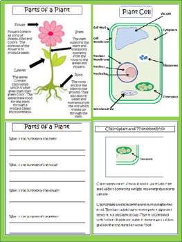 Plants: Parts, Life Cycle, & The Plant Cell (Test Included)