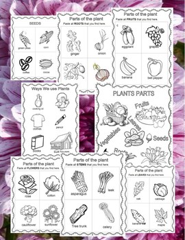 Plants Parts Sort booklet - Put Plant Parts Together - and Center