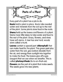 Plants: Parts of a Plant