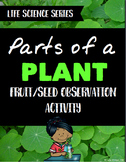 Plants: Parts of a Plant FREE Activity - Fruit and Seed Observation