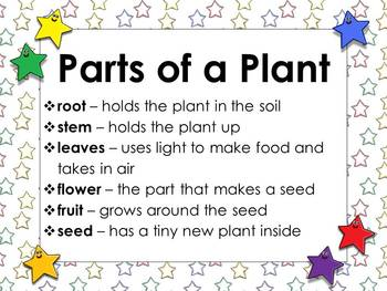 Plants: Parts of a Plant Matching Game Sort