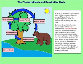 Plants - Photosynthesis and Respiration - A Fifth Grade SMARTBoard Introduction
