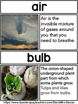 Plants Picture Word Wall - Real Pictures