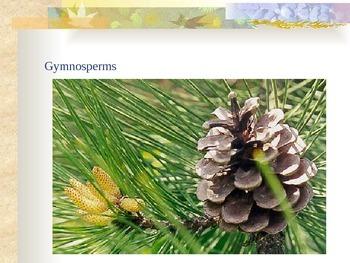 Plants - Plant Classification