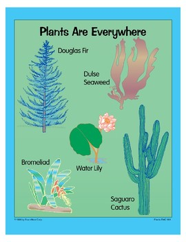 Plants: Plants Are Everywhere