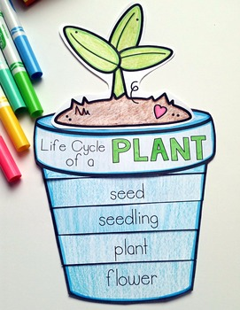 Plant Life Cycle by Karen Jones | Teachers Pay Teachers