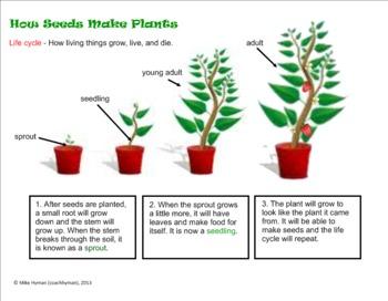 Plants, Plants, and More Plants - A Second Grade SmartBoard Review