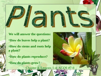 Plants PowerPoint (5th Grade Scott Foresman Science- Ch. 3)