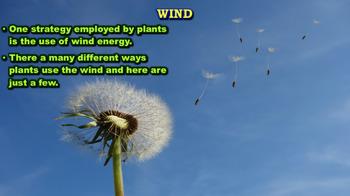 Plants - PowerPoint & Activities