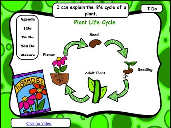 Plants: PowerPoint and Worksheets