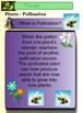 Plants Powerpoint Slideshow Science 42 Slides