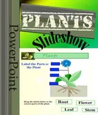 Plants Powerpoint Slideshow Science 42 Slides
