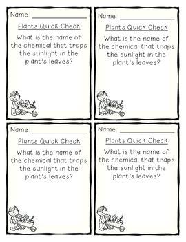Plants Quick Checks!