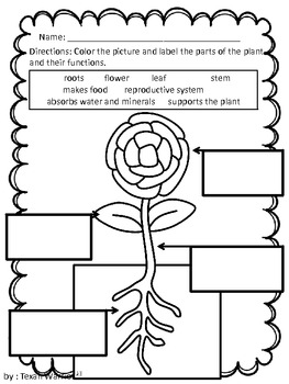 Plants Review and Assessment