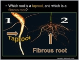 Plants, Roots, Leaves, Photosynthesis,  Lesson