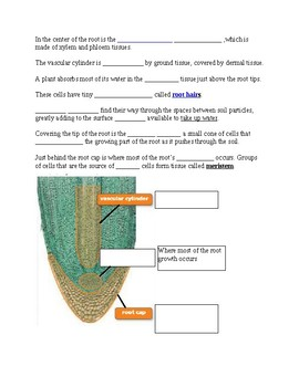 Plants - Roots and Stem notes