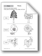 Plants: Roots and Stems
