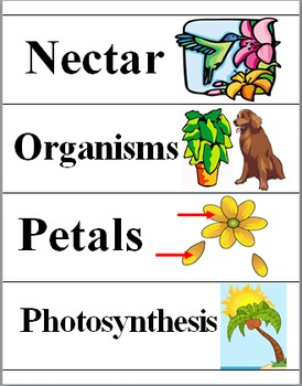 Plants Illustrated Science Word Wall