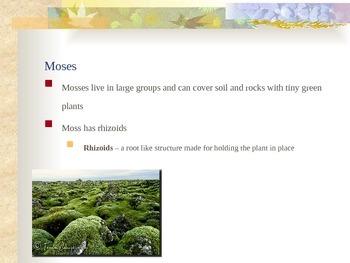 Plants - Seedless Plant