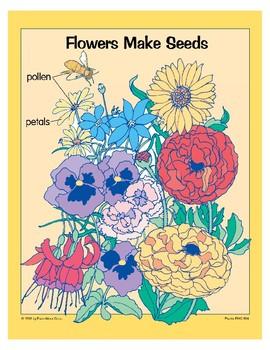 Plants: Seeds