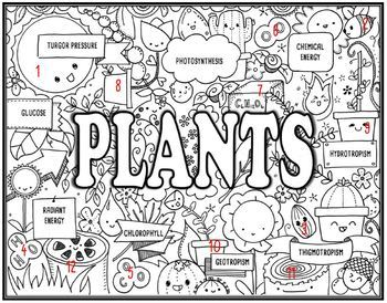 Plants Seek and Find Science Doodle Page
