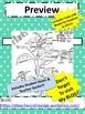 Plants Sketch Notes W/Teacher Guide, Notes & Student FIB!